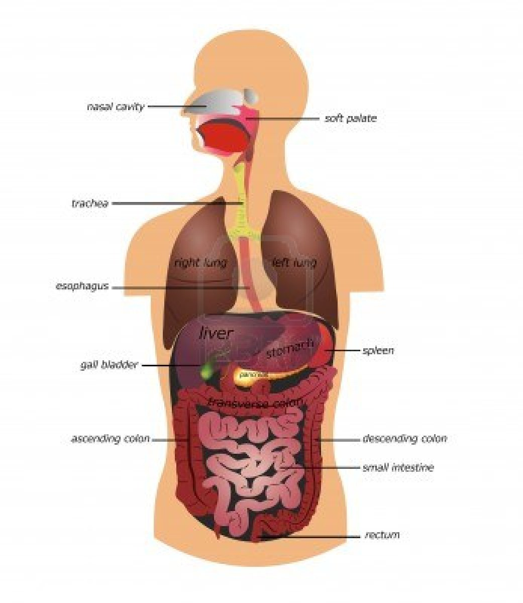Stress Proofing The Gi Tract Dr Meletis