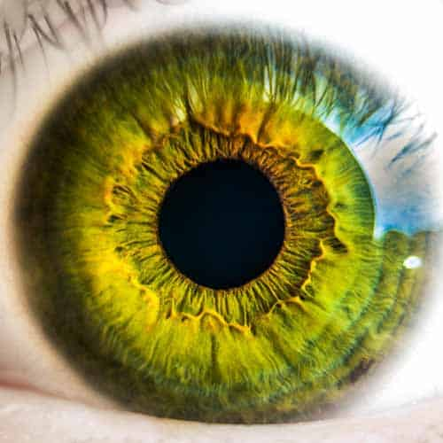 eye with green iris